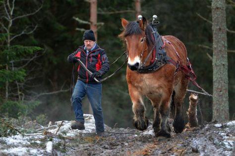 lumberjack-horse